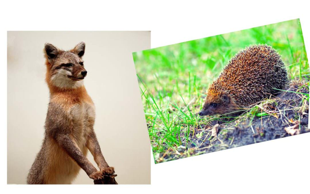 Fox or Hedgehog: Which are you?